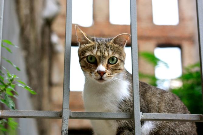 Kissat Istanbulissa