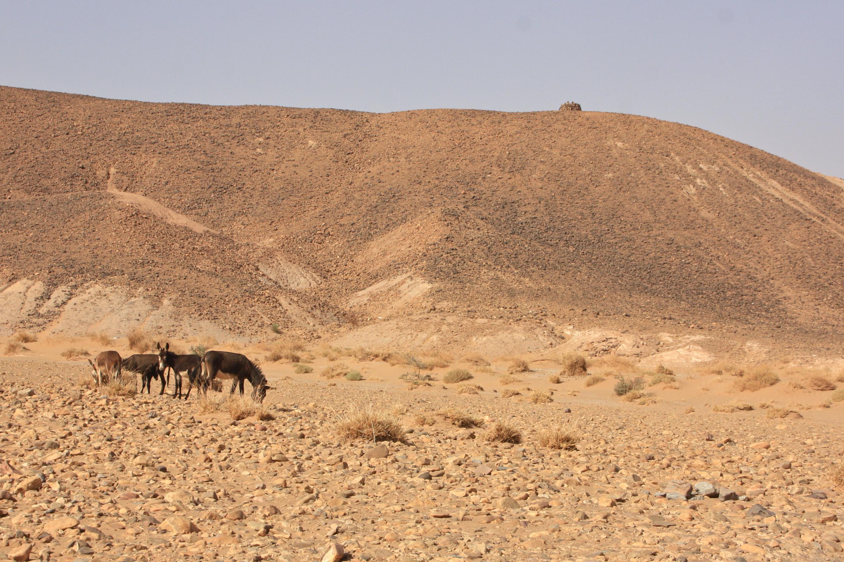 marokko kokemuksia