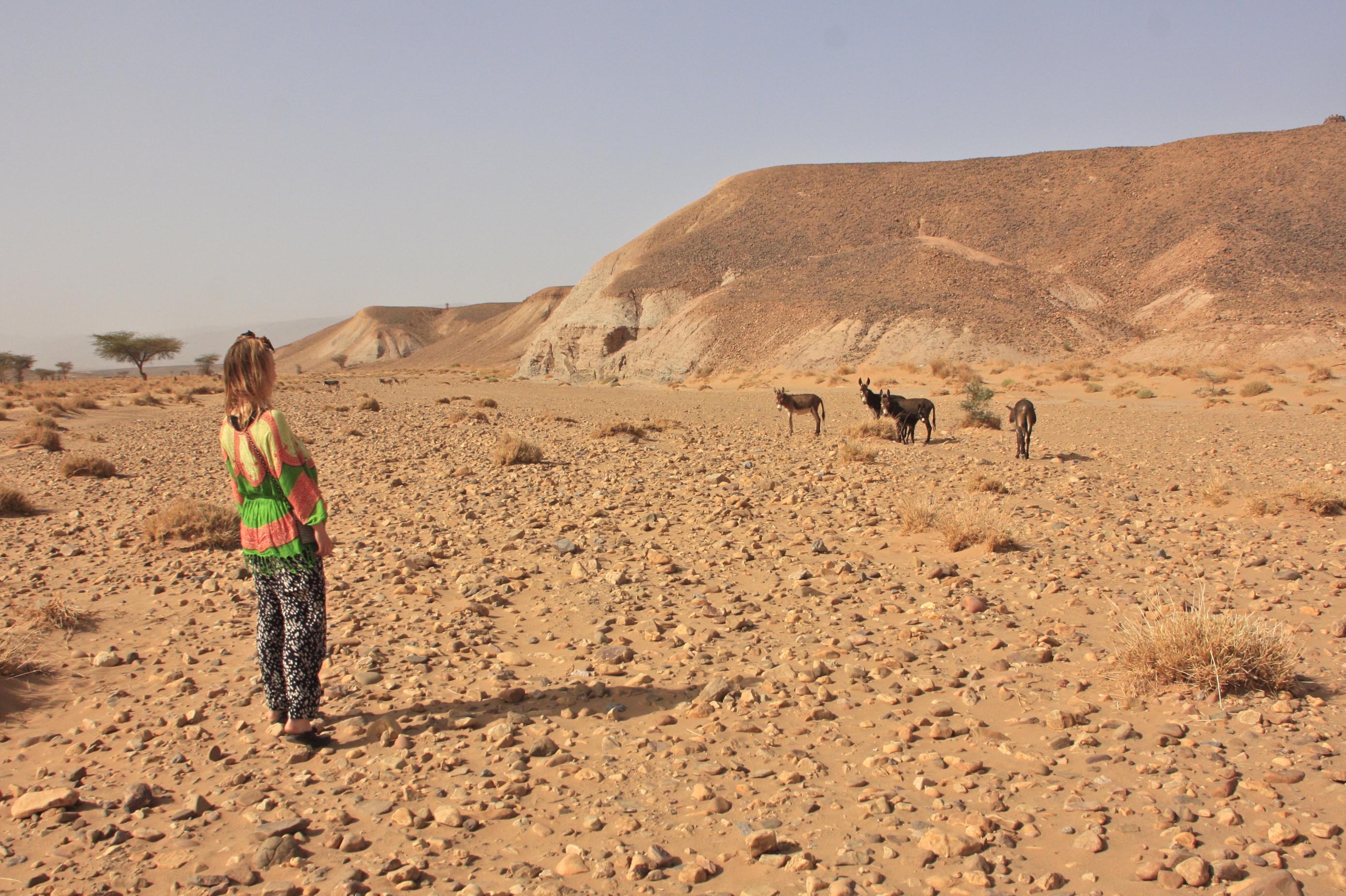 marokko matkavinkit