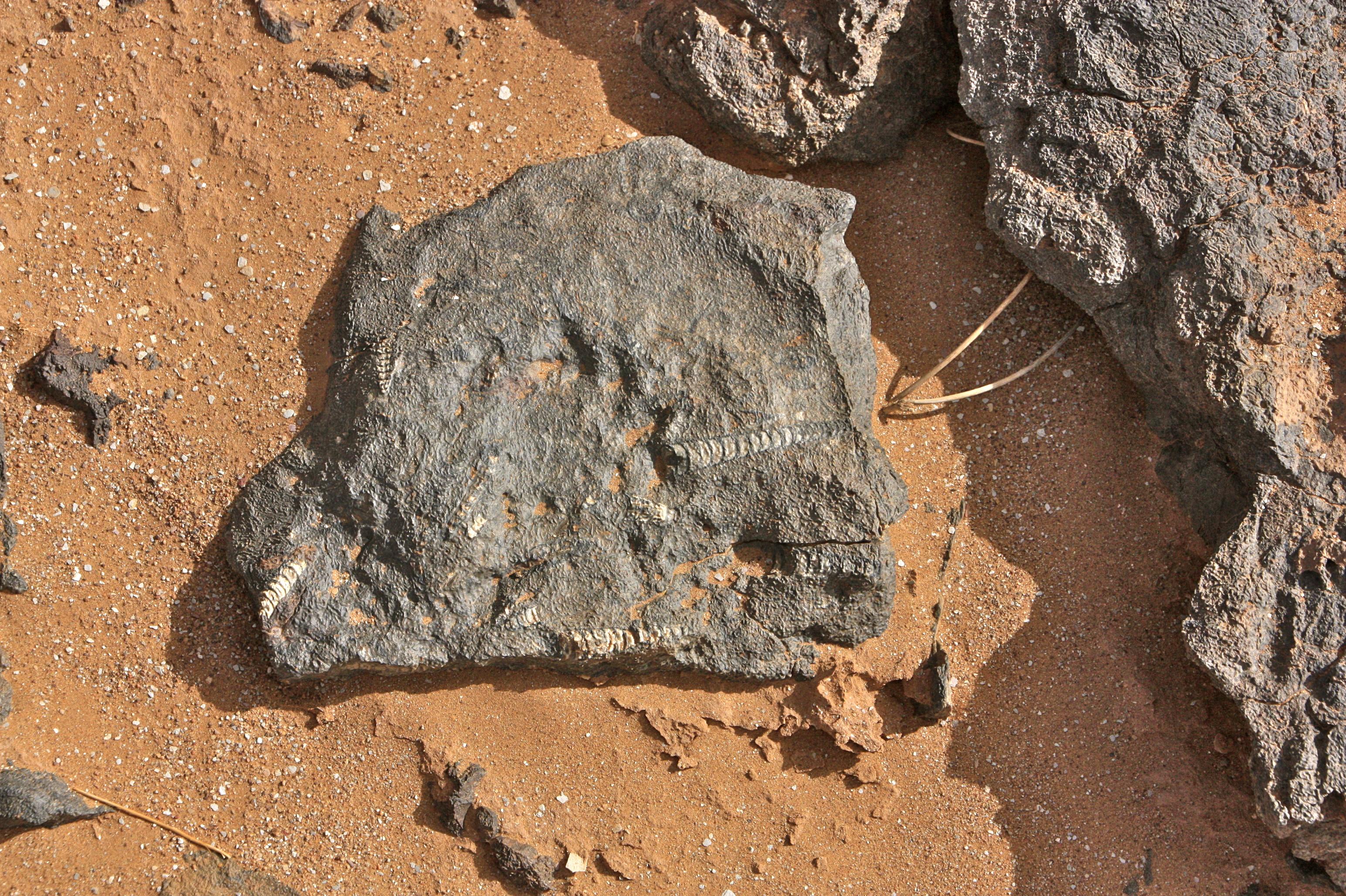 fossiili marokko