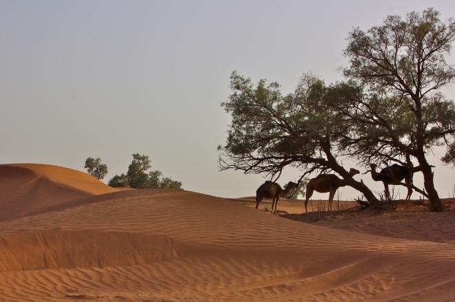 Marokko sahara