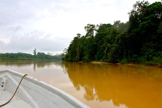 Kinabatangan-joki Borneolla