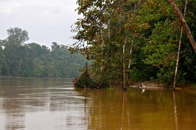 Kinabatangan-joki Borneo