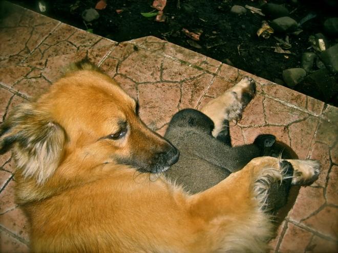 Apina, joka rakastui koiraan