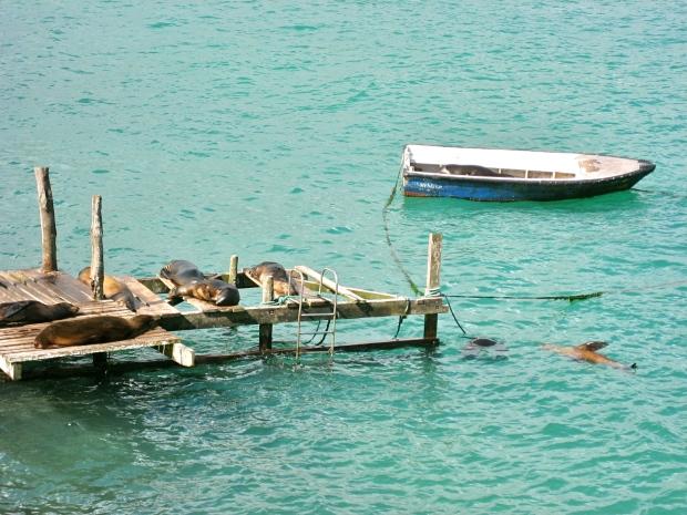 Galapagossaaret Urbaani viidakkoseikkailijatar loma