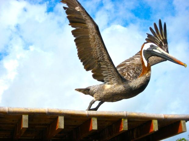 Galapagossaaret ecuador urbaani viidakkoseikkailijijatar