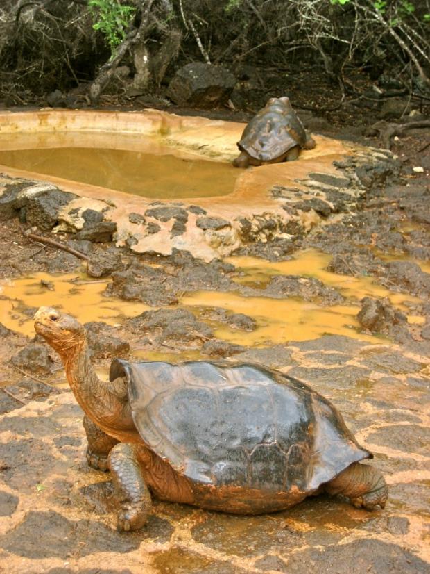 Ecuador 2008 263