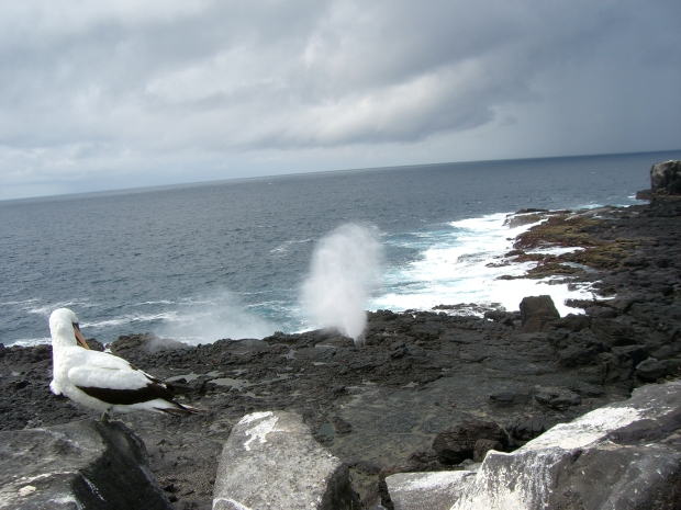 Kopio Ecuador 2008 725