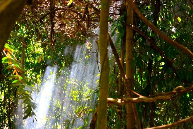 Langkawi viidakko